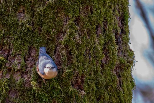 uccello3